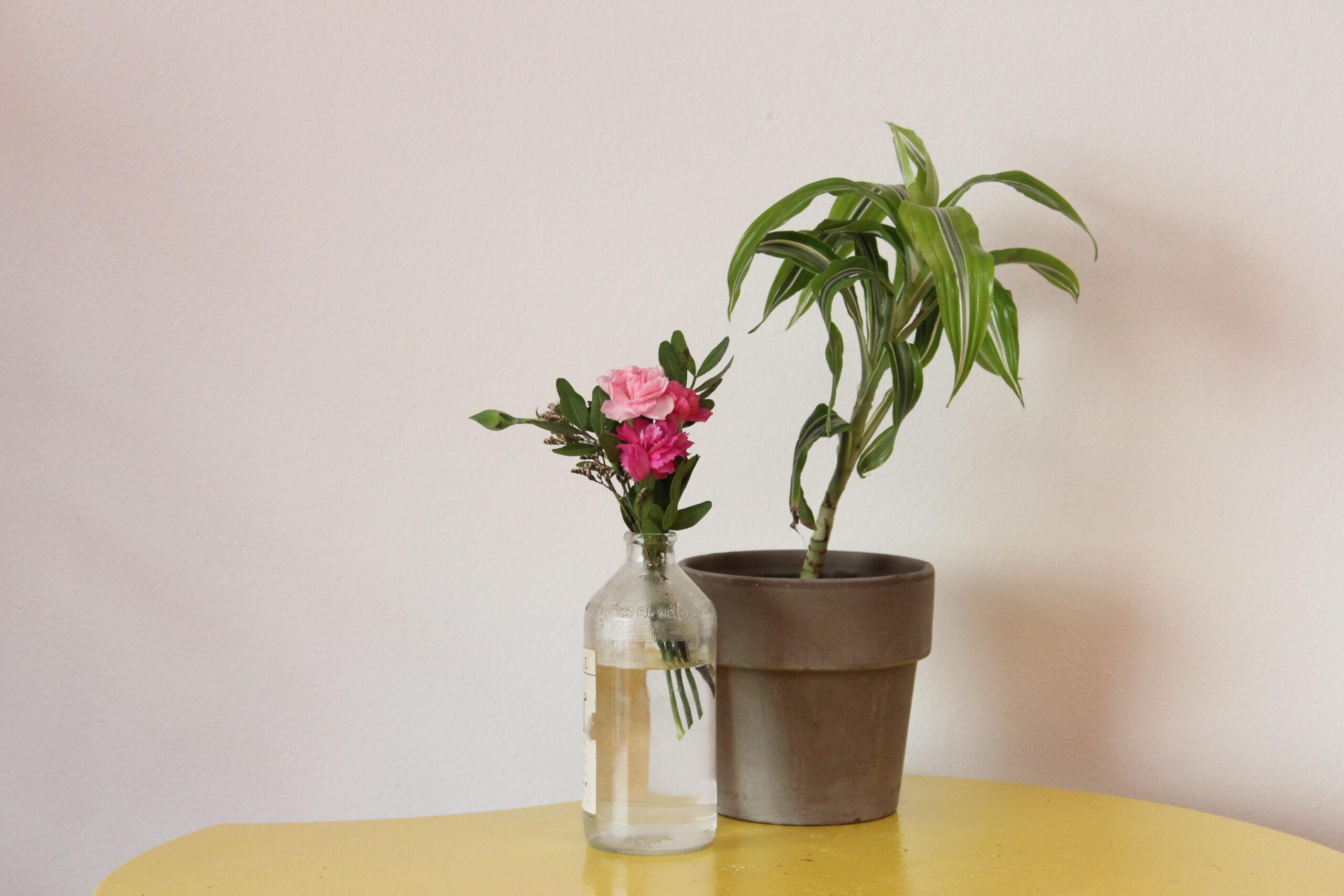 Kasvi ruukussa ja 2 kukkaa läpinäkyvässä maljakossa keltaisella pöydällä seinää vasten